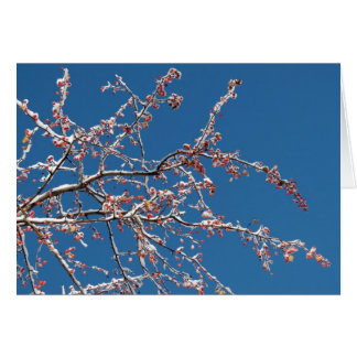 Snow on the crabapple card