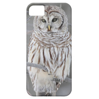 Snow Owl Barely There iPhone 5 Case