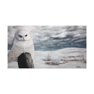 Snow Owl On Prarie Canvas Print
