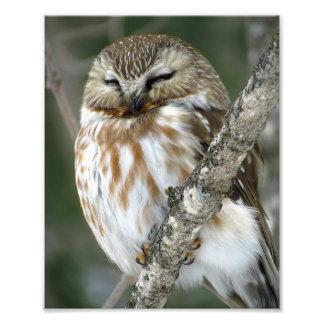 Snow Owl Photo Print