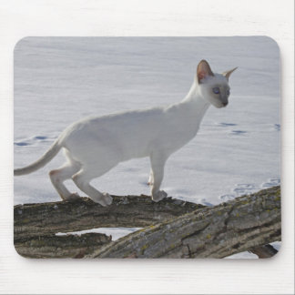 Snow Siamese Cat on Tree Branch, Lilac Point Mousepads