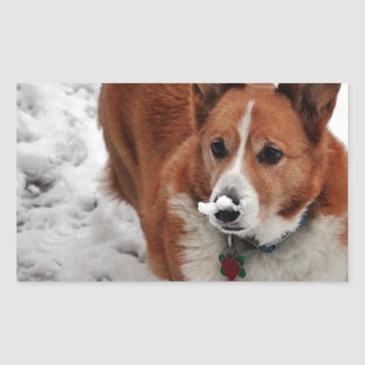 Snow Snout Rectangle Stickers