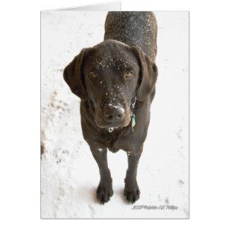 Snow Sprinkled Chocolate Labrador Photograph Card