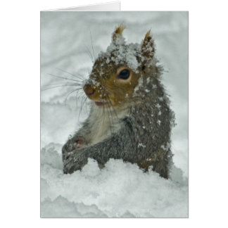 Snow Squirrel Card