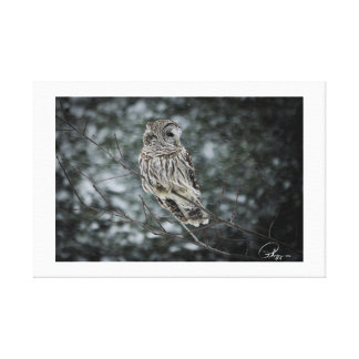 Snow storm Barred Owl Canvas Print