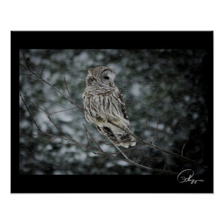 Snow Storm Barred Owl Poster