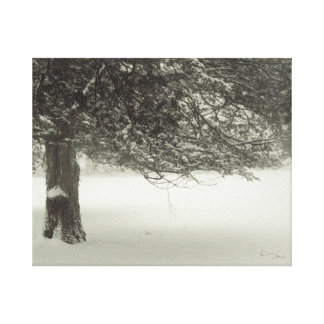 Snow Tree 2 Canvas Print