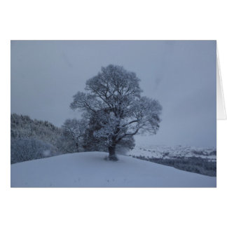 Snow Tree Card