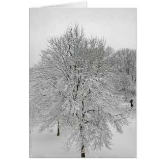 Snow Trees Card