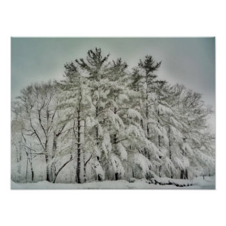 Snow Trees   HDR Poster