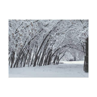 Snow Trees  Landscape  Single Print