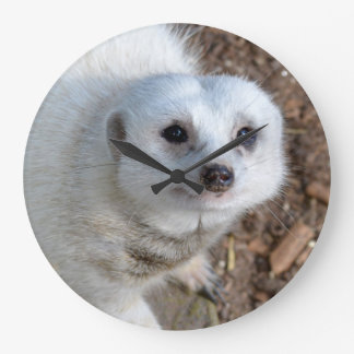 Snow White Fur Meerkat, Large Round Wall Clock
