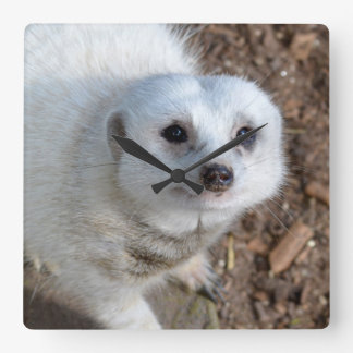 Snow White Fur Meerkat, Square Wall Clock