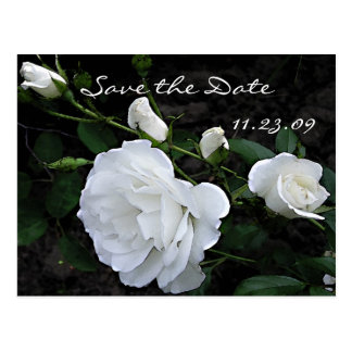 Snow White Rose - Save the Date Card Postcard