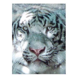 Snow White Tiger Postcard