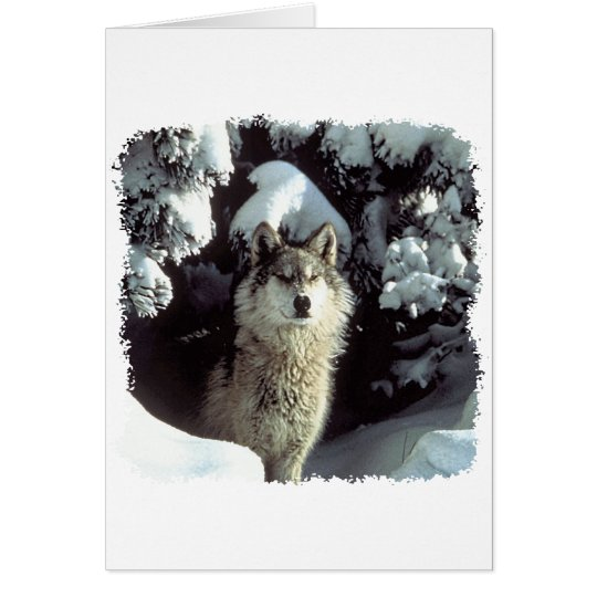 Snow Wolf  Wolves Greeting Card
