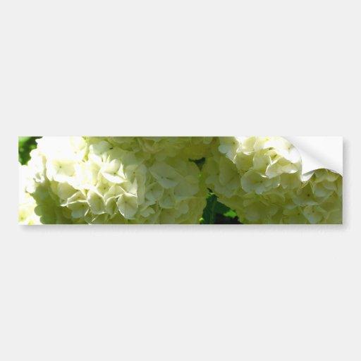 Snowball Bush Blooms Bumper Sticker