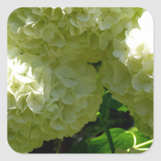 Snowball Bush Blooms Square Stickers