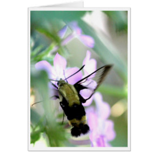 Snowberry Clearwing Hummingbird Moth Card