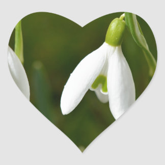 Snowdrop flowers heart sticker