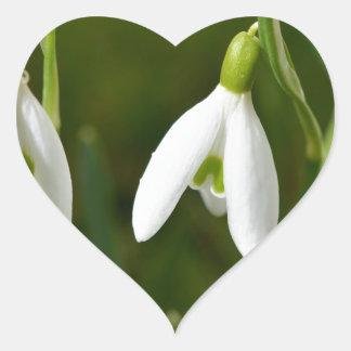 Snowdrop flowers heart sticker