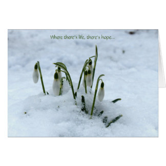 Snowdrop Imbolc Greeting Card
