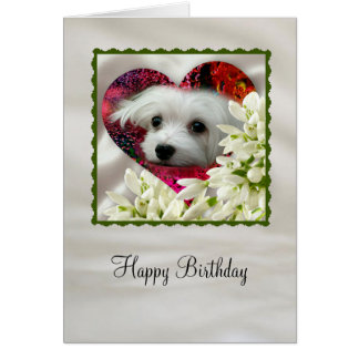 Snowdrop the Maltese Card
