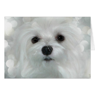 Snowdrop the Maltese Christmas/Greeting Card