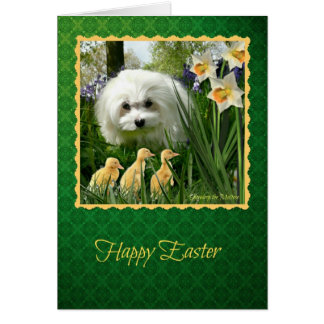 Snowdrop the Maltese Easter Greeting Card