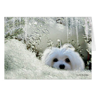 """Snowdrop the Maltese """"Thinking of You"""" Card"""