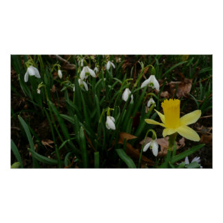 Snowdrops and Daffodil Print