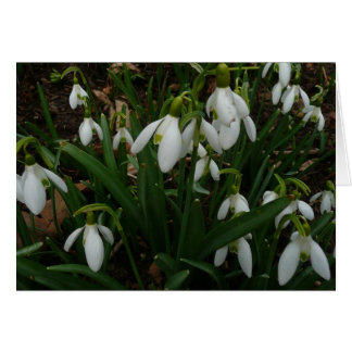 Snowdrops I (Galanthus) White Spring Flowers Card
