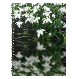 Snowdrops in reflection notebook