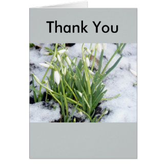 Snowdrops In Snow Thank You Card