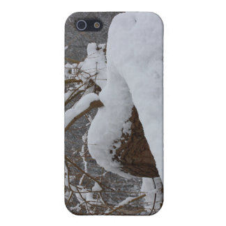 snowed tree branch iPhone 5/5S cases