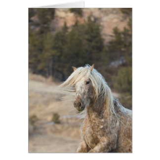 Snowfall - Galloping to Freedom Greeting Card
