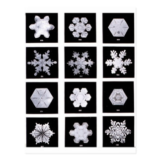Snowflake Plates Weather Photography Postcard