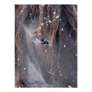 Snowflakes on Fell Pony Poster
