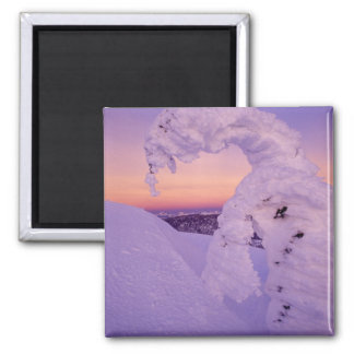 Snowghost in the Whitefish Range at Twilight Square Magnet