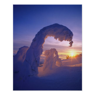 Snowghosts in the Whitefish Range of Montana Poster