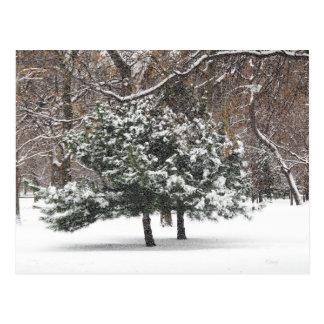 Snowing Postcard