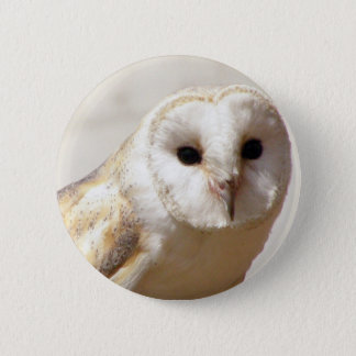 Snowy Barn Owl  Pin