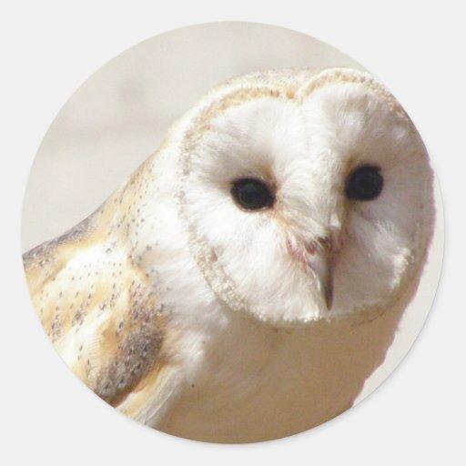 Snowy Barn Owl  Stickers