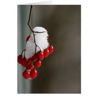 Snowy berries card