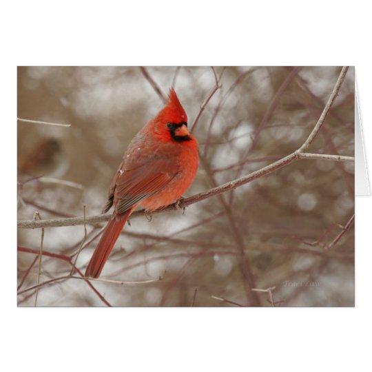 Snowy Cardinal Christmas Card