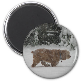 Snowy Cocker Spaniel Magnet