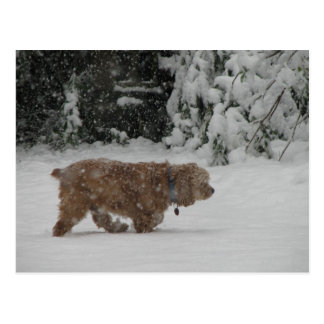 Snowy Cocker Spaniel Postcard