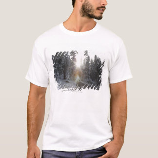 Snowy dirt road going into the sun T-Shirt