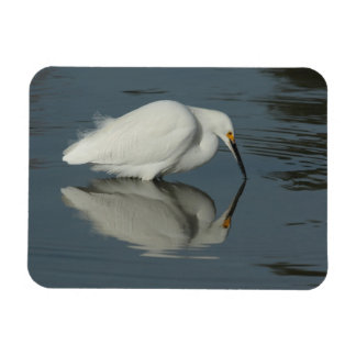 Snowy Egret 2 Rectangular Magnet Flexible Magnets