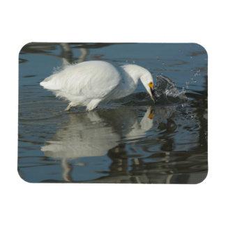 Snowy Egret 5 Rectangular Magnet Magnet